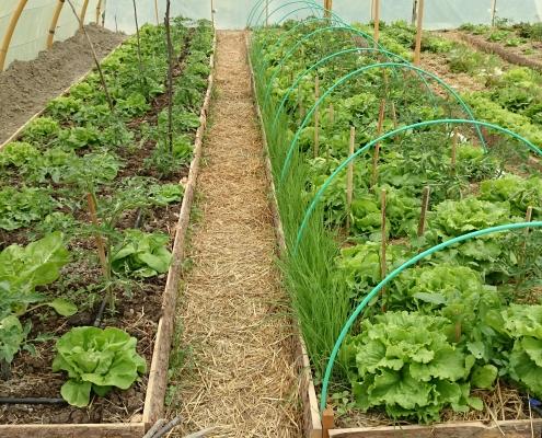 Cultivo bancales, ecologismo Huerteco
