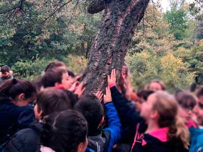 Alcornoque árboles singulares, Burgos