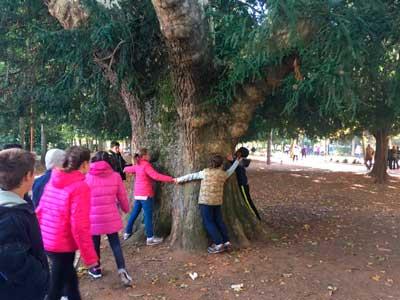 Platanero árboles singulares Burgos