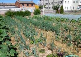 Cultivos ecológicos Huerteco