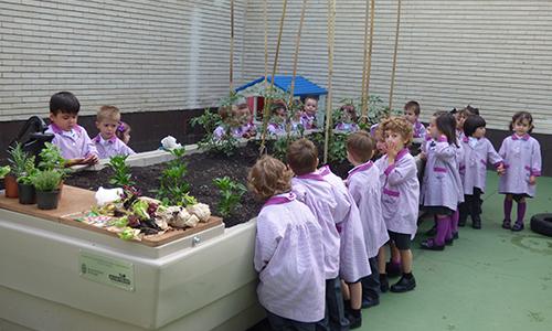Huertos escolares en Burgos organizados por la asociación Huerteco, un proyecto educativo de agricultura ecológica y educación ambiental.