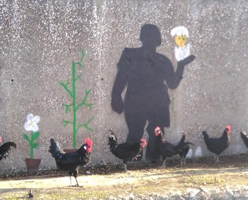 raza autóctona gallina castellana negra