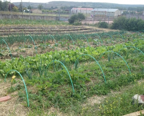Bancales cultivo Huerteco