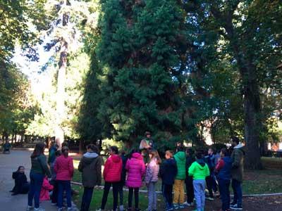 Pinsapo, árboles singulares Burgos