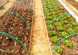 Cultivos hoja Huerteco